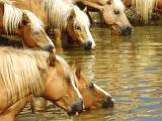 Toscana, cavalli